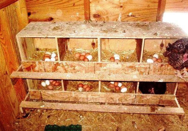 Гнезда для кур в курятнике