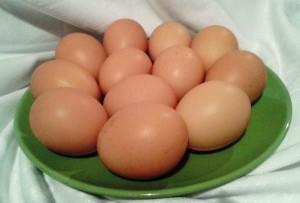 Яйца от кучинских куриц