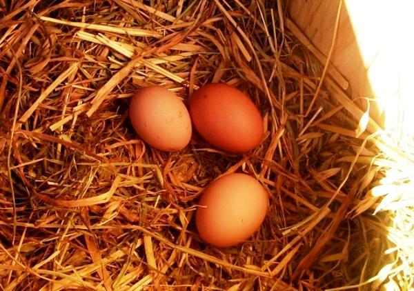 Как сделать гнездо для яиц