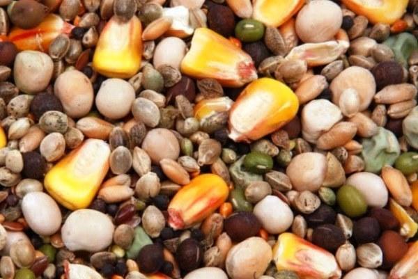 Зерно для откорма индюков