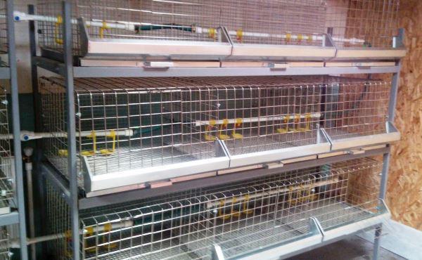 Клетки для выращивания бройлерных кур