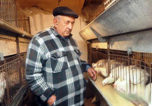 Кормление цыплят бройлеров в клетке