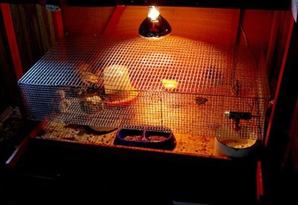 искусственное освещение для перепелов
