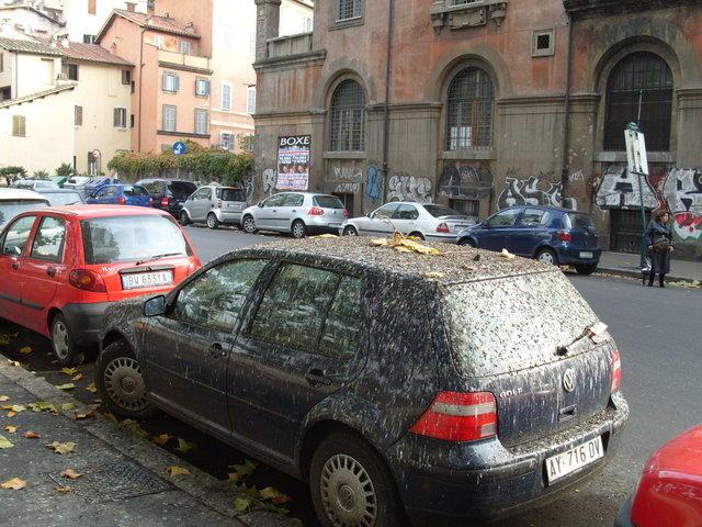 Голубиный помет на машине