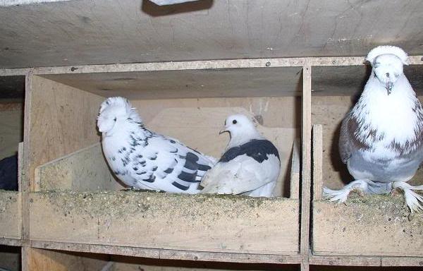 Фото ящиков для голубей