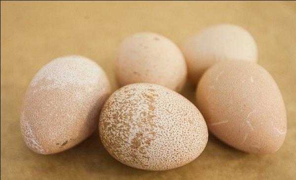 Фото пяти цесариных яиц