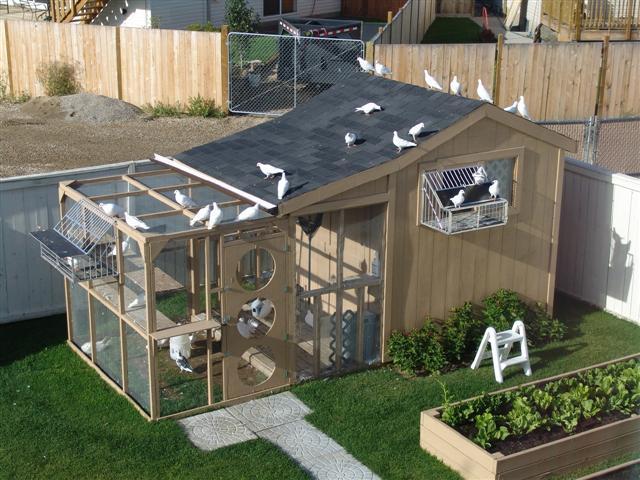Фото голубятни с двухскатной крышей