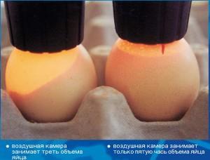 Проверка количества потери воды яйцом в период инкубации