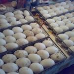 Фото яиц в инкубаторе
