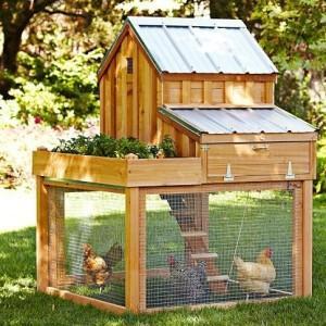 Фото двухъярусного курятниками с площадкой для кур
