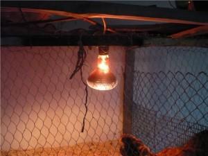 ИК лампа в курятнике