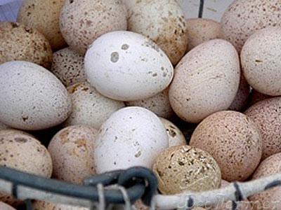 Фото корзинки с индюшиными яйцами