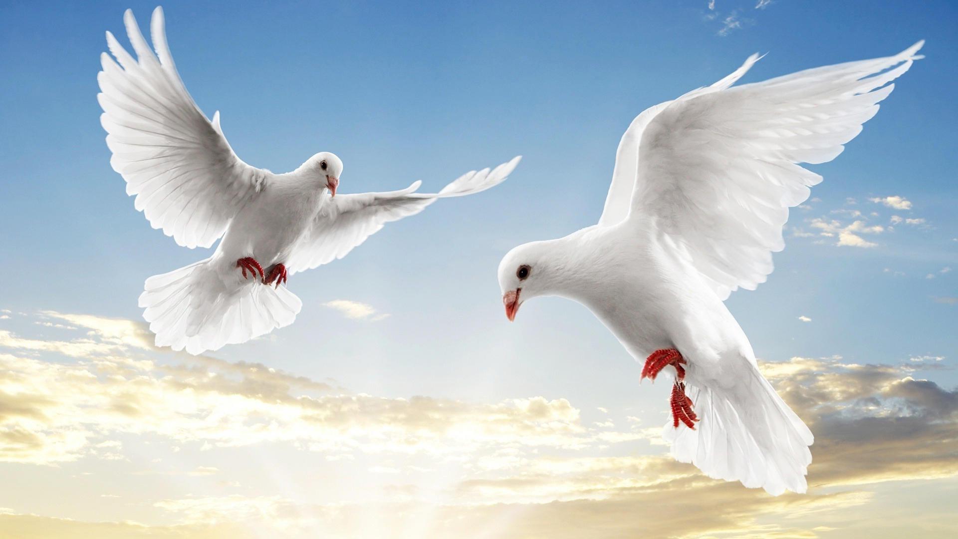 Горные голуби