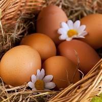 Куриные яйца в корзине