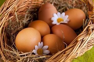Яйцо - большая по размеру женская половая клетка