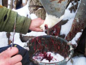 Спускание крови с бройлера