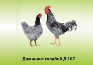 Доминант голубой Д 107