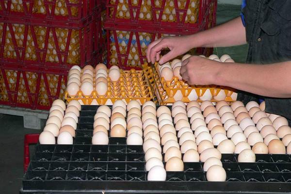 Закладка подготовленного инкубационного материала