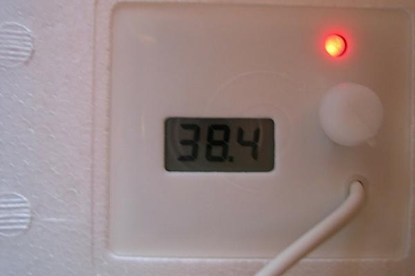 Индикатор температуры домашнего инкубатора