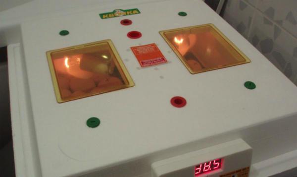 """Инкубация яиц в бытовом приборе """"Квочка"""""""