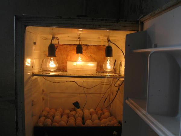 Инкубатор из старого холодильника