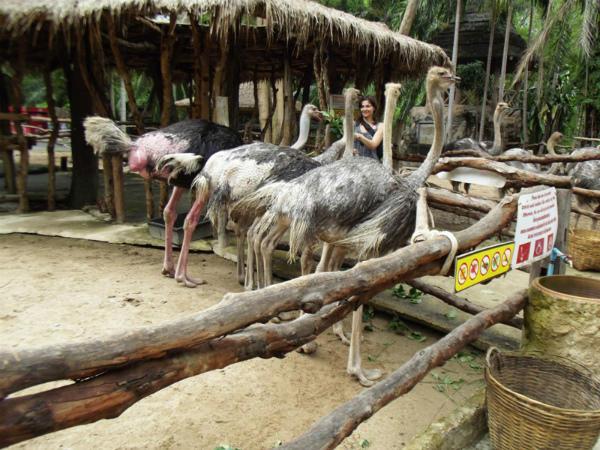 Страусы в вольере открытого зоопарка