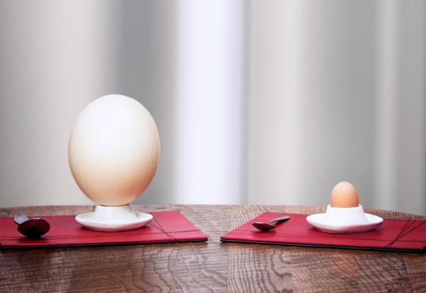 Вареные куриное и страусиное яйца