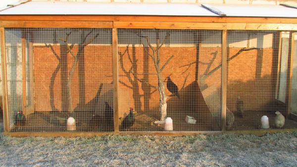 Уютные вольеры для содержания фазанов