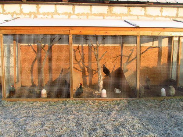 Самодельный вольер для фазанов