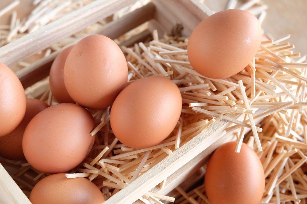 Годовой показатель яйценоскости составляет 200–210 яиц