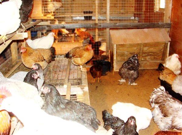 Курятник для куриц несушек