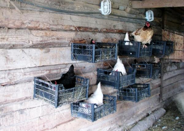 Гнезда для кур несушек