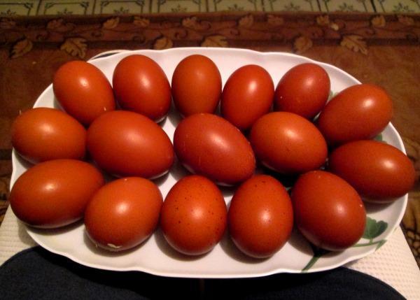 Темные яйца кур Маран