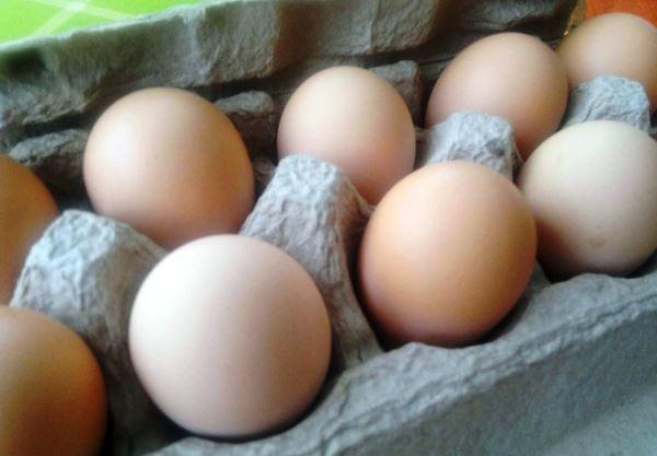 Яйца породы кур Джерсийский гигант