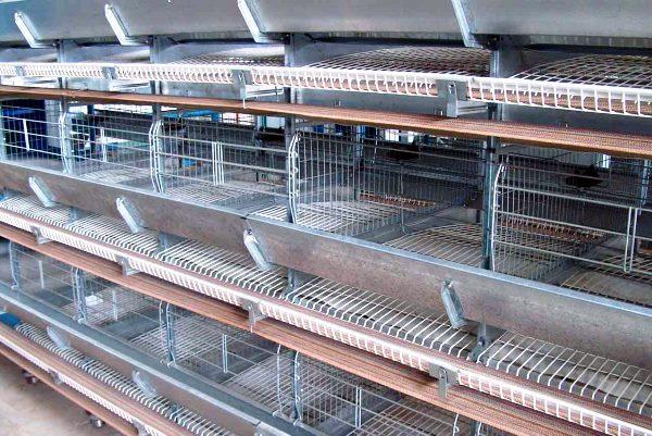Клеточные батареи на птицефабрике