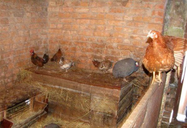 Кирпичный сарай для кур