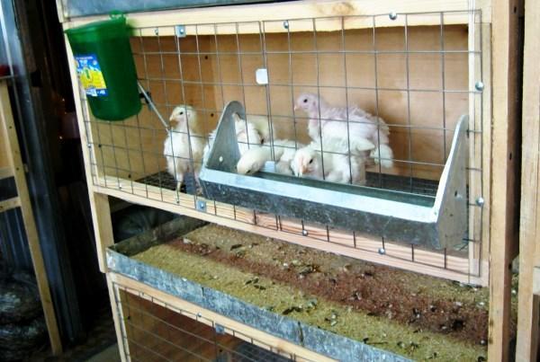 Уборка в клетке для кур