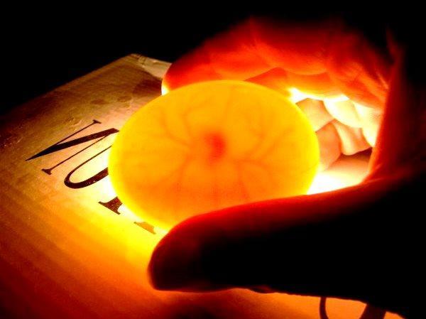 Овоскопирование яиц для наблюдения за эмбрионом