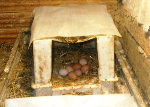 Гнездо из пластикового ящика