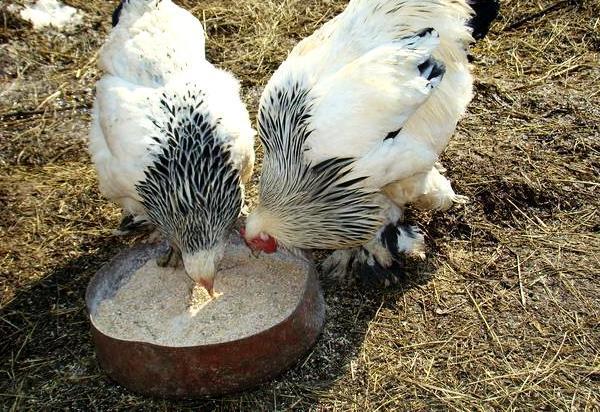 Куры едят комбинированный корм