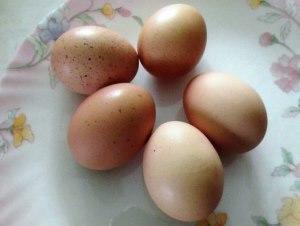 Яйца кур породы Амрокс