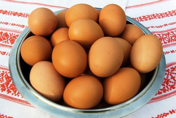 Разведение кур на яйца