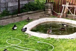 Искусственный водоем для водоплавающей птицы