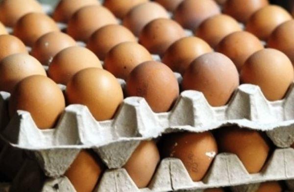 Бизнес на продаже яиц