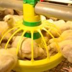 Кормушки для бройлерных цыплят