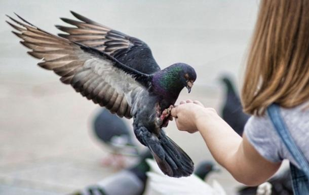 Что едят голуби в домашних условиях и чем их кормить зимой: советы с фото и видео
