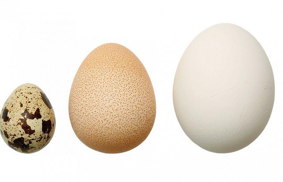 Перепелиное(слева), цесариное и куриное(справа) яйца