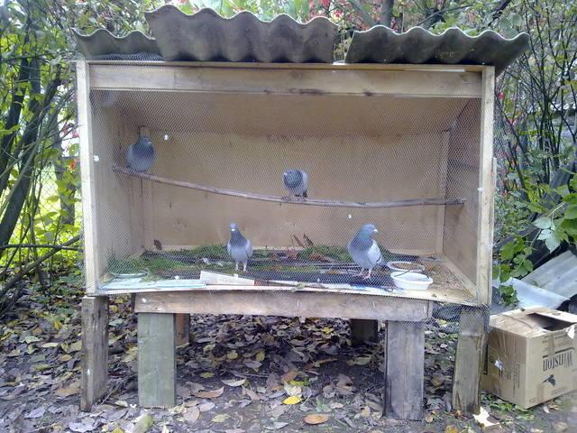 Четыре голубя в голубятне