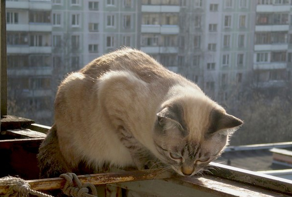 Фото кошки на перилах