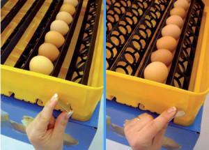 Фото инкубатора для яиц